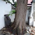 strom v zajetí staveb
