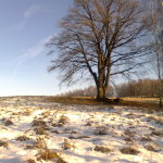 ideální podmínky na kraji lesa